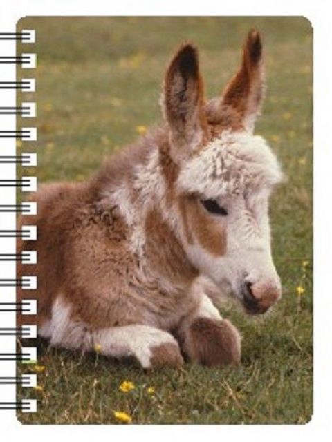 Donkey Foal 3D Notebook, Ideal Christmas stocking filler